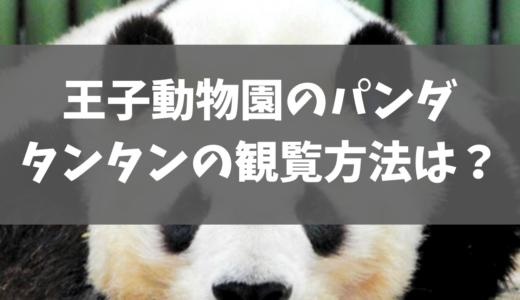 王子動物園パンダのタンタンはいつまで見られる?観覧方法を調査。